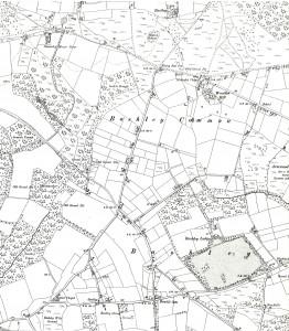 Bashley Common.1