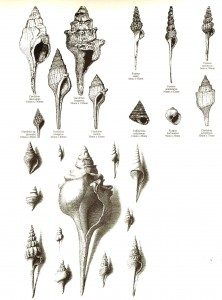 Fossils of Barton on Sea.